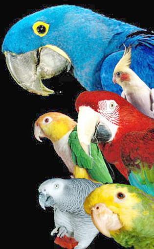 Веселый и говорящий попугай жако